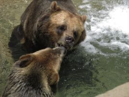 Grizzlys Playing by ascenciok