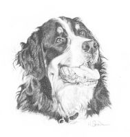 Bernese Mountain Dog by Utlah