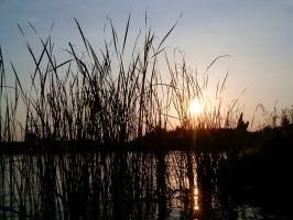 Through the reed by molnar86