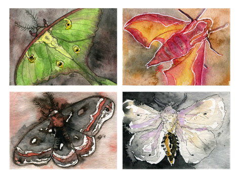 more moths by Creative-Caro