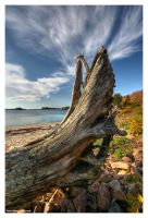 Stump by DennisChunga