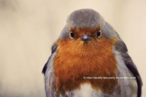 Frendly Robin by UnrehearsedSplendour