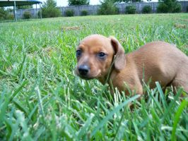 Dog In Grass by Deatonusaf18