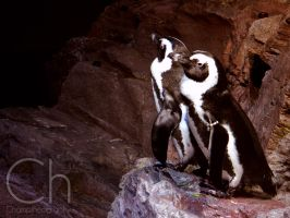 Penguins 1 by Champineography
