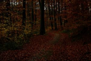 Dark autumn woods by sahk99