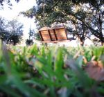 Swing Above the Grass 2 by luthien-soroniel