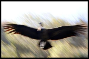 Fly slower by GonBo