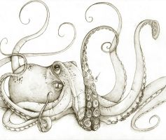 Octopus by octootco