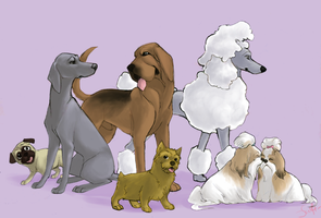 Best In Show - Dogs by shelzie