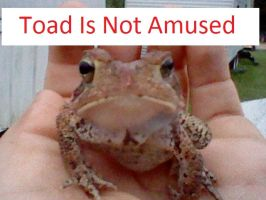 Toad is not Amused by blackzero04