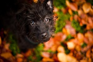 Dog in the Park IV by Freggoboy