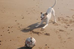 My dog Loves the ball (sparky) by SoulOfTheWarrior