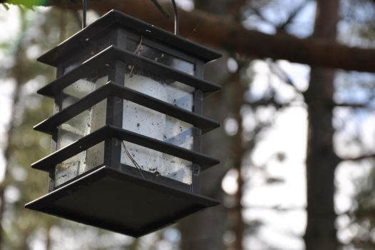 lamp by youmaster