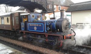 Bluebell at Bluebell 7th Dec 2014 by Terrier55Stepney