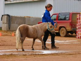 Mini Horse1 by xxlyndseyelizxx