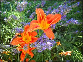 Purple and Orange by Ottachan