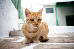 red cat by lalofee
