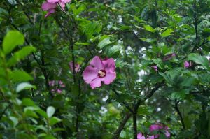 2015-06-27 Nature 17 by skydancer-stock