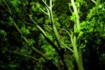 Green Branches by mikebranski