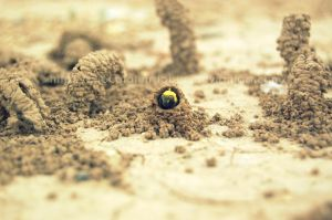 Solitary Bee by ChocolateTrilobite