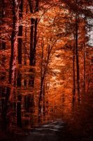 Autumn ablaze II by Aenea-Jones