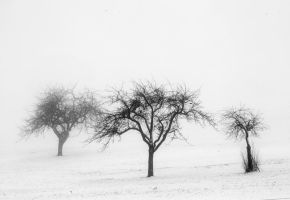 three trees by indojo