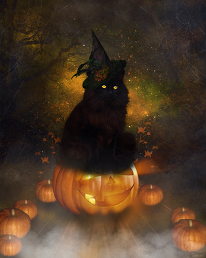 Halloween Cat by tinca2