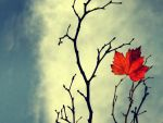 leaf wallpaper by RickHaigh
