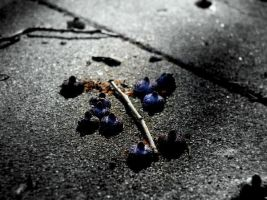 Berries, Benicia Cemetery 9 07 by Noreiarain