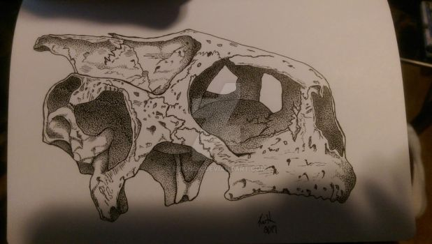 Sea Turtle Skull by Evilnok