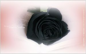Black Rose II ~ Special Edition by RazielMB