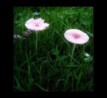 Magical Mushrooms by Forestina-Fotos
