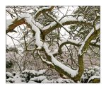 Snow limbs. L1040164, with story by harrietsfriend