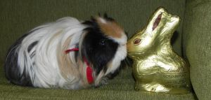 Happy Easter Guinea Pig by Leia1987