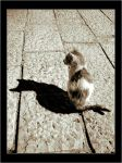 Just me and my shadow by gilad
