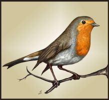 Little robin by LauraMSS