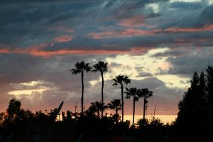 Palms over Marrakesh by rojobe