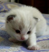 Napoleone 2 weeks old by ON1TZUKA