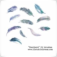 Feathers PS brushes by iCatchUrDream