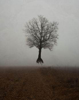 Flying Tree by Fidelicant