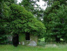 old ivy covered house by equusstock