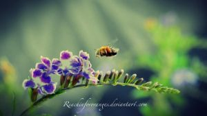 I can Bee anything I want to Bee by ReachingForOranges