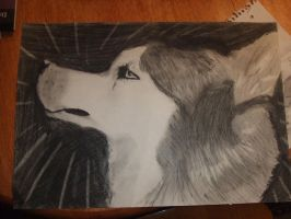 Charcoal Wolf by maxst5011