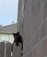 Cats 009 by Moose-Stock