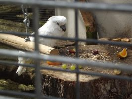 White Parrot 2 by In2FF7