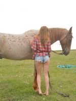 wild horses and babes by capitainrock2001