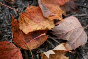 Leaves by StolenSecrets