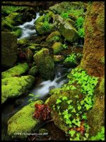 Fresh Green, GSMNP by TRBPhotographyLLC