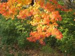 Fall Colors by cjtremlett