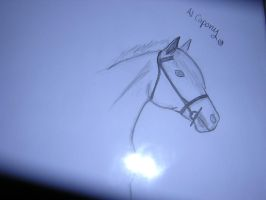 Horse Art Requests.... by strainam